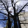 Альбом: Звіт КП «Жилсервіс» про виконану роботу з обслуговування житлового фонду та благоустрою міста за період з 17.09.2021 по 23.09.2021 року