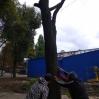 Альбом: Звіт КП «Жилсервіс» про виконану роботу з обслуговування житлового фонду та благоустрою міста за період з 24.09.2021 по 30.09.2021 року.