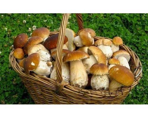 Як обрати якісні гриби?