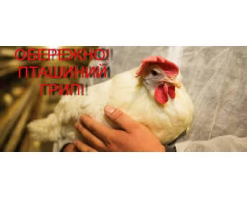 Пташиний грип та його небезпечність для людини, профілактика захворювання