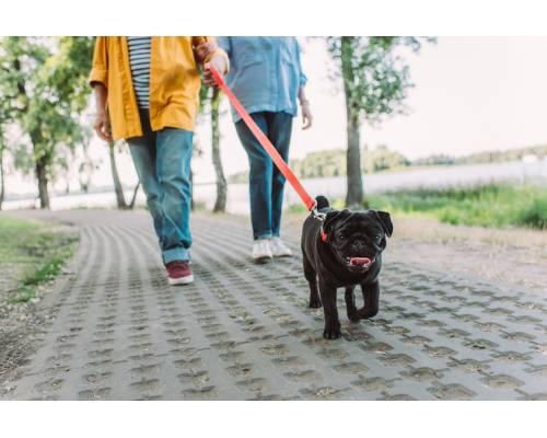 Не слідкуєте за улюбленцем – несіть відповідальність: про врегулювання вигулу тварин