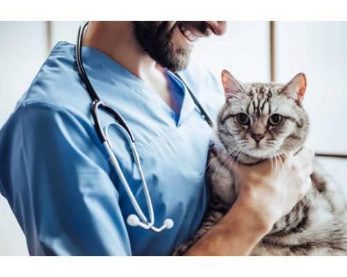 Уряд скасував заборону на ведення ветеринарної діяльності з лікувально-профілактичної допомоги тваринам, оптової, роздрібної торгівлі ветпрепаратами