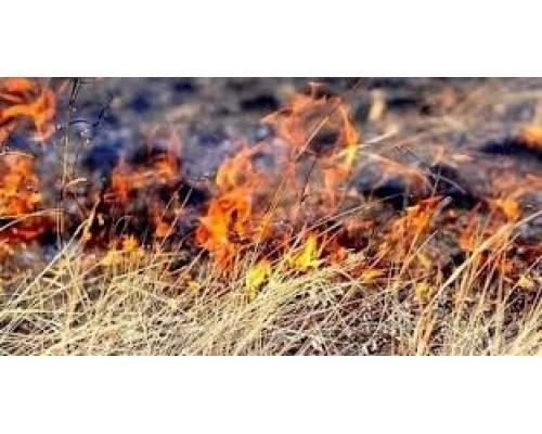 Коли палає земля
