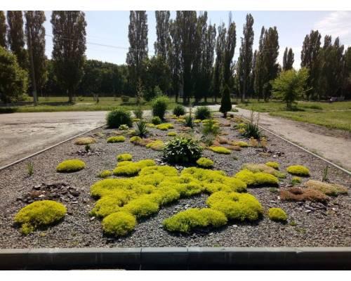 Місто зеленіє та квітне завдяки нашій праці